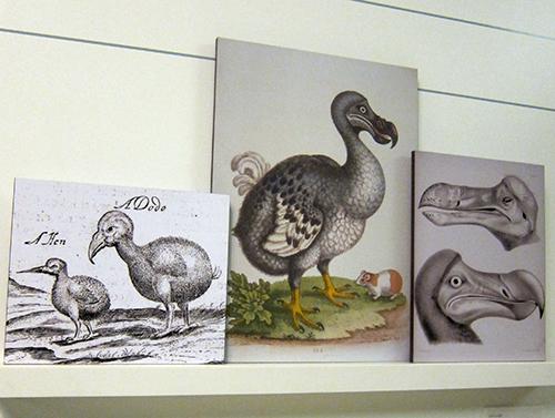I love dodo because of Gerald Durrell. 因著傑瑞杜瑞爾,我愛上了多多鳥。