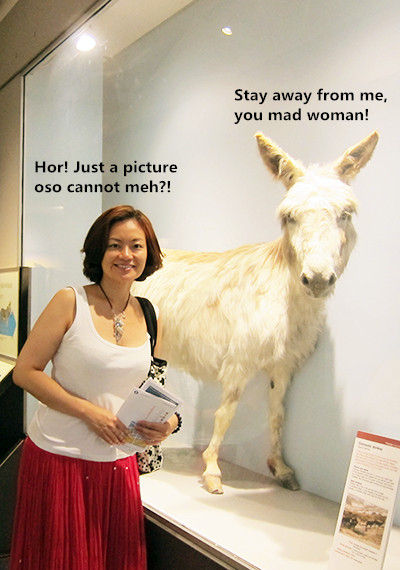Having a donkey or two is my dream! 一直都夢想能養驢子!